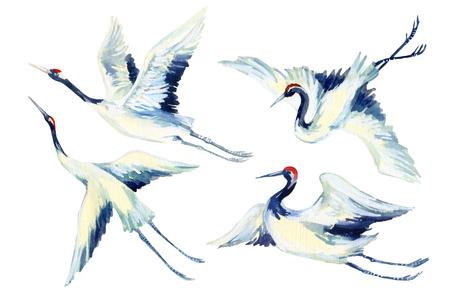 수채화 비행 크레인 조류 집합입니다. 손으로 그린 전통적인 그림