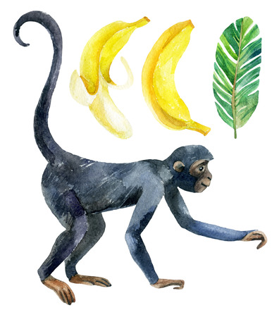 Monkey and banana isolated on white background. A cute monkey and exotic fruits. Watercolor hand painted illustration Stock Photo