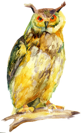 ornithologist: watercolor owl on a branch, raster illustration