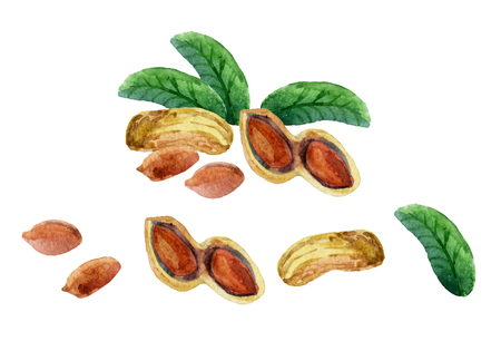 Watercolor set of peanut. Hand painted illustration Stock Photo
