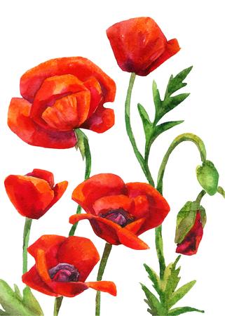 Watercolor poppies field