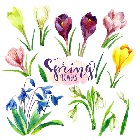 Watercolor spring flowers set. Hand painted snowdrop, crocus flowers isolated on white background Reklamní fotografie - 84297778