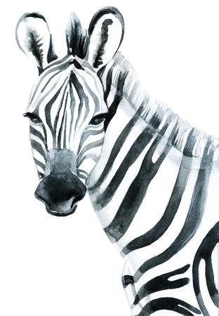 Aquarelle zèbre isolé sur fond blanc illustration raster Banque d'images - 84395289