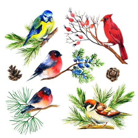 Watercolor bullfinch, titmouse, cardinal and sparrow on branches. Hand painted illustration