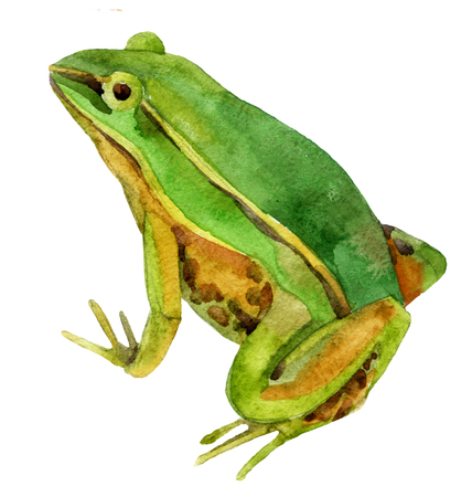 Watercolor green frog