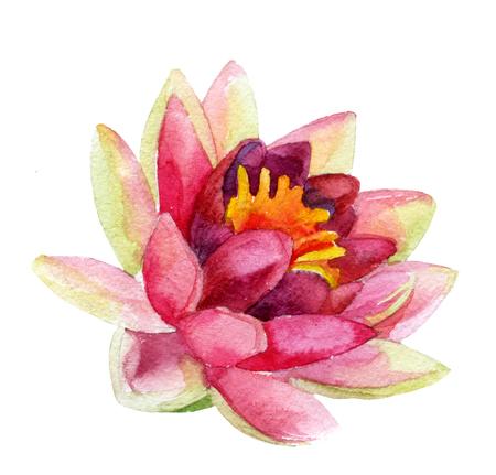 leaf logo: Hand painted lotus flower. watercolor illustration