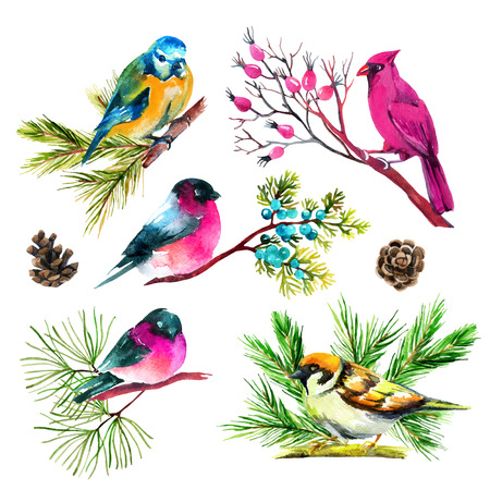 Watercolor bullfinch, titmouse, cardinal and sparrow on branches. Hand painted illustration isolated on white background Stock Photo