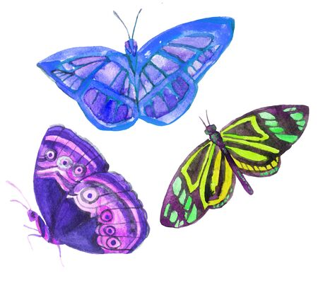Watercolor butterflies. Hand painted illustration