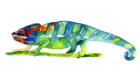 水彩カメレオンの図 写真素材