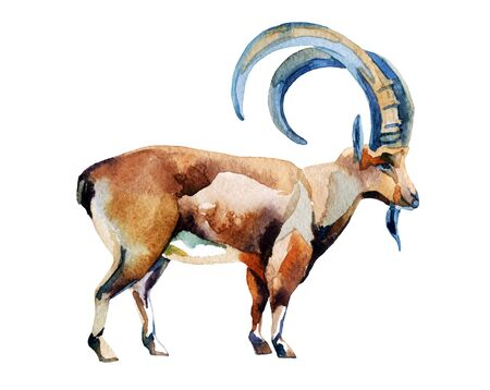 new: Watercolor sketch of goat. Chinese astrological sign. New Year 2015. Stock Photo