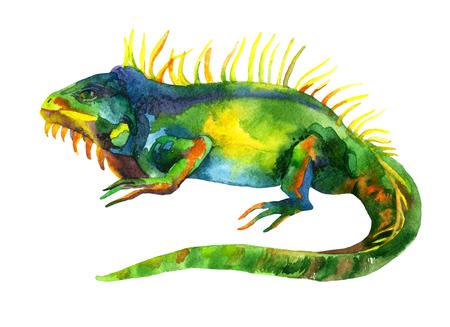 watercolor iguana background, raster illustration