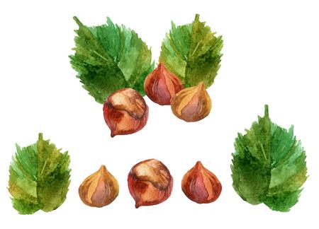 Watercolor set of hazelnuts. Hand painted illustration Stock Photo