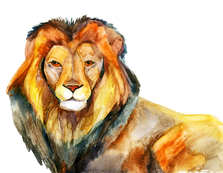 Watercolor lion on a white background
