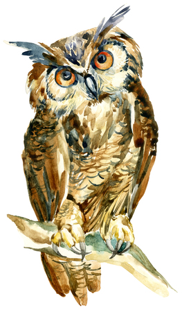 watercolor owl on a branch isolated on white background. Cute long eared owl staring with orange eyes. Watercolor wise bird. Hand painted art illustration Stock Photo