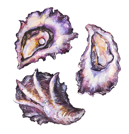 Watercolor painted oyster set isolated on white background. Raw molluscs illustration