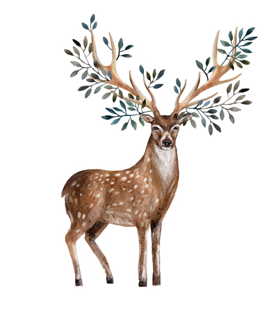 Hand painted watercolor deer isolated on white background. Animal art illustration for invitation, wedding, greeting cards etc. Antlers with leafs, branches. Wildlife concept for hipster design Zdjęcie Seryjne - 122715062