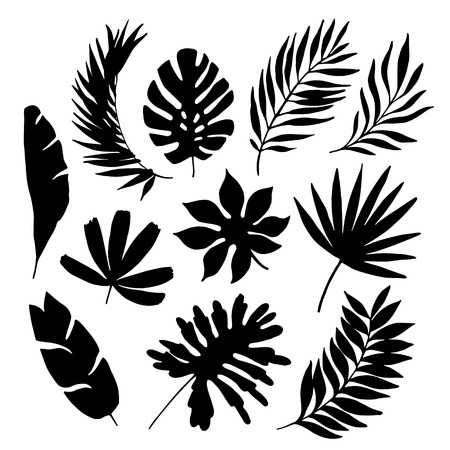 tropical leaf silhouette elements set isolated on white background. Palm, fan palm, monstera, banana leaves. Vector illustration in black and white colors