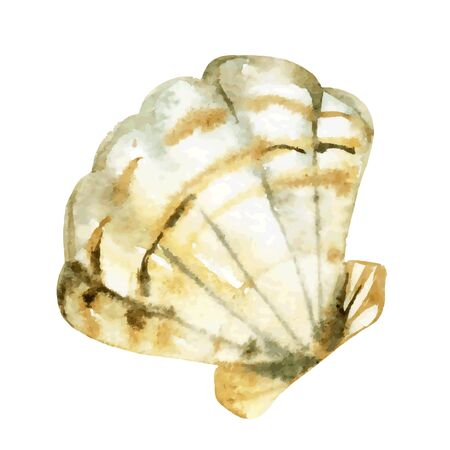 Shell watercolor illustration. Hand drawn sketch