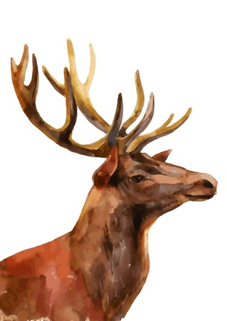 Watercolor deer head - profile view. Vector illustration