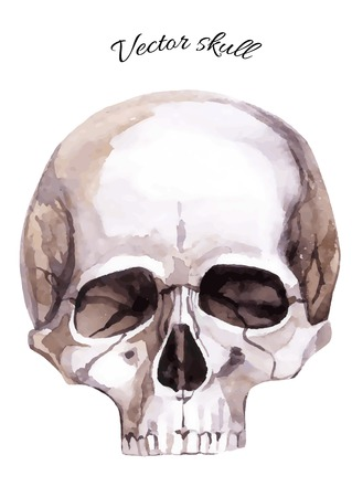 Watercolor human skull. Hand painted vector illustration