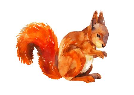 Watercolor sketch of a squirrel. Vector illustration