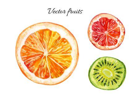 Watercolor set of fresh orange, kiwi and grapefruit. Hand painted vector illustration Çizim