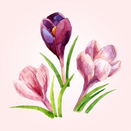 Hand painted crocus flowers. Watercolor vector illustration