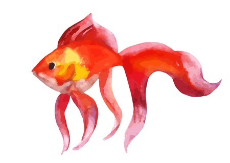 Gold fish - vector watercolor illustration