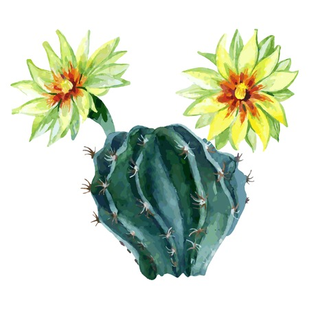 Watercolor cactus isolated on white background. Hand painted vector illustration