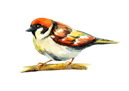 sparrow watercolor, vector illustration