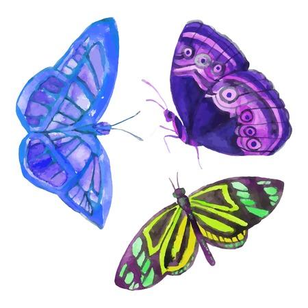 Watercolor butterflies. Hand painted vector illustration Иллюстрация