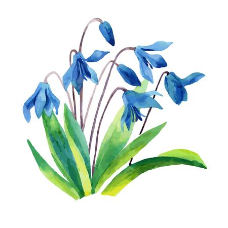 Spring snowdrop flower. Watercolor vector illustration