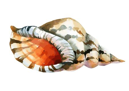 Watercolor shell, vector illustration