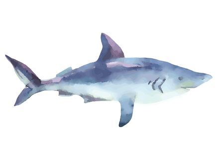 Watercolor shark isolated on white background. Hand painted artistic illustration