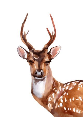 Watercolor deer head - front view. Vector illustration