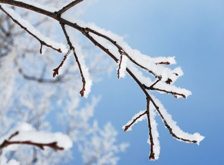 winter snow branch on the blue sky background Stock Photo