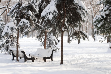 Winter snow landscape with pair of bench and fir-trees