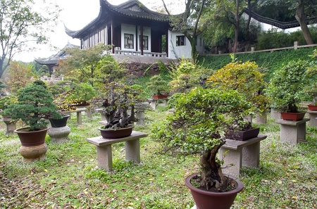 Traditional chinese garden with bonsai in pots