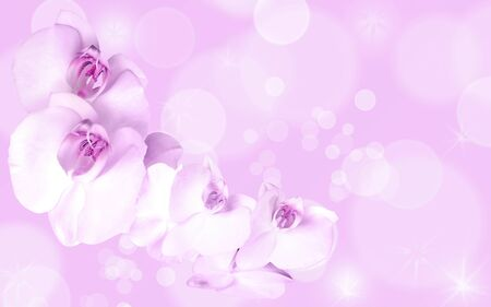 Romantic card with orchid on the pink background