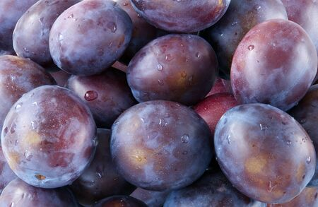Background of the fresh purple raw plums