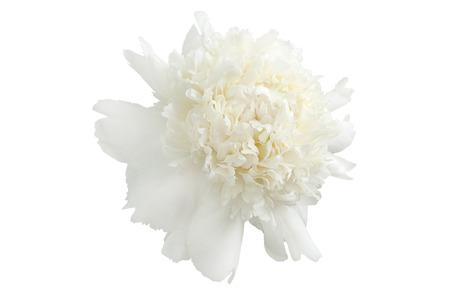 Single white peony bud on a white background Stock Photo