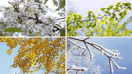 Quattro stagioni collage con l'albero di autunno inverno primavera estate