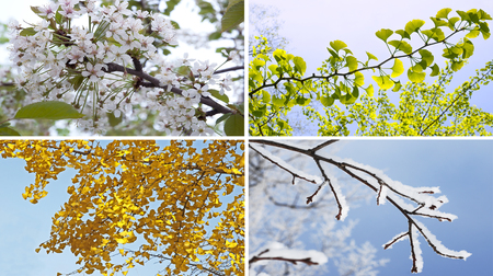 Four seasons collage with spring summer autumn winter tree Standard-Bild