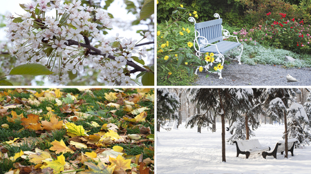Four seasons nature with spring summer autumn winter pictures Stock Photo
