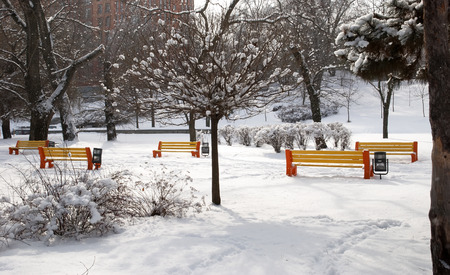 Empty benches in the winter snowy park