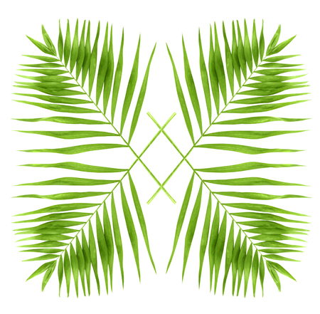 Green palm branches isolated on a white background