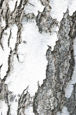 Abstract background from black white birch crust Stock Photo