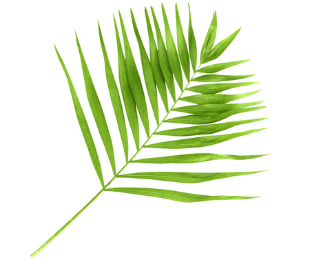 Green palm branch isolated on a white background Stock Photo