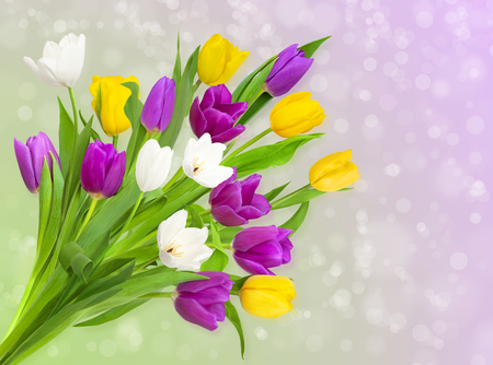 Beautiful purple spring tulips on abstract bokeh background Stock Photo