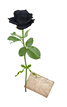 Black rose with card isolated on a white background